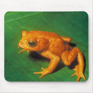 Orange Frog Mouse Mat