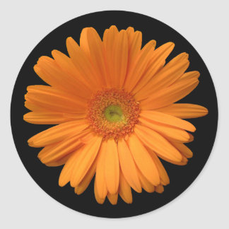 Orange Gerber Daisy Classic Round Sticker