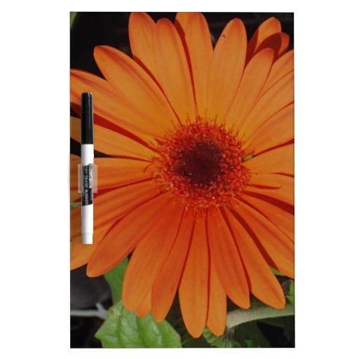 Orange Gerber Daisy Dry-Erase Boards