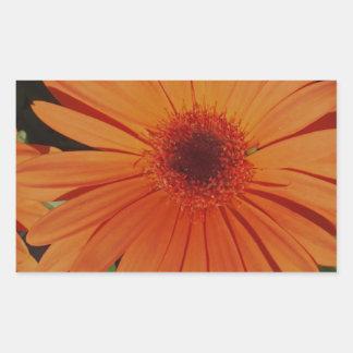 Orange Gerber Daisy Rectangle Sticker
