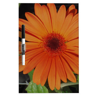 Orange Gerber gerbera Daisy daisie Dry-Erase Whiteboard