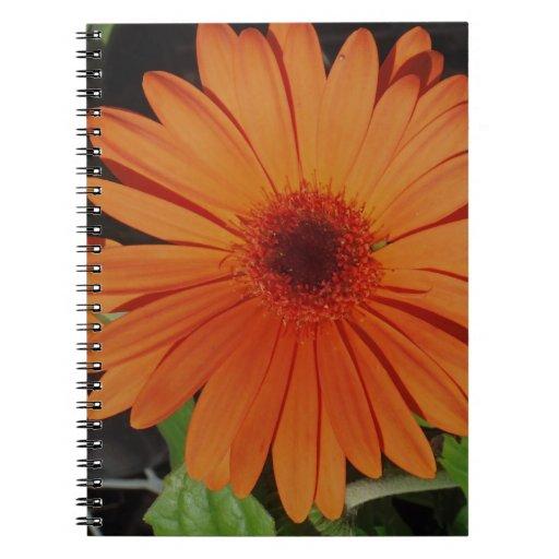 Orange Gerber gerbera Daisy daisie Notebooks