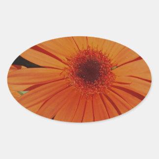 Orange Gerber gerbera Daisy daisie Oval Sticker