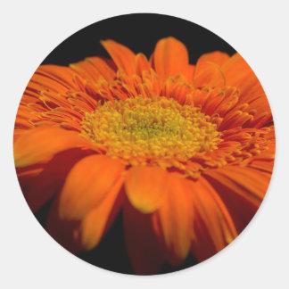 Orange Gerber Stickers