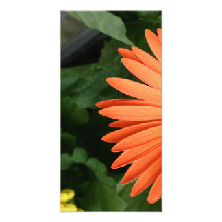orange gerbera daisy (1 of 3) photo print