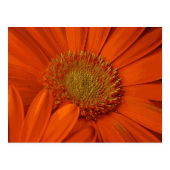 Orange Gerbera Daisy Flower Bouquet Blossom Postcard