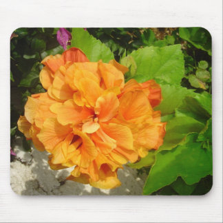 ORANGE GLORY  HIBISCUS MOUSE MAT