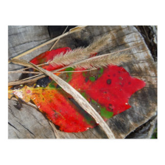 orange green, yellow and fall leaf and dried grass postcard