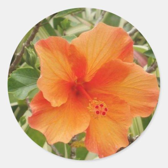 orange hawaii hibiscus plant classic round sticker