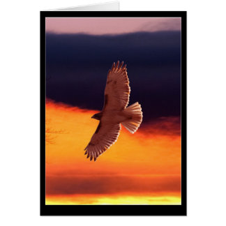 Orange Hawk Note Card
