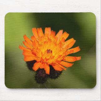 Orange Hawkweed Mouse Mat
