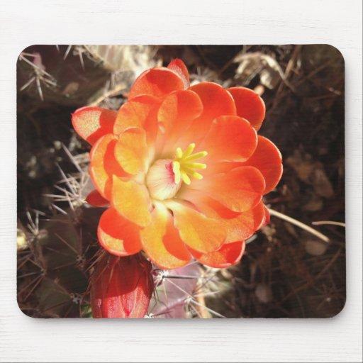Orange Hedgehog Cactus Flower Mouse Pad