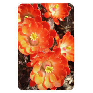 Orange Hedgehog Cactus Flowers flexi magnet