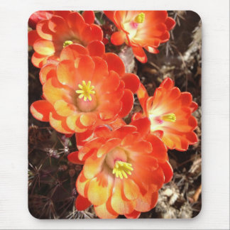 Orange Hedgehog Cactus Flowers Mouse Pad