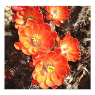 Orange Hedgehog Cactus Flowers photo print