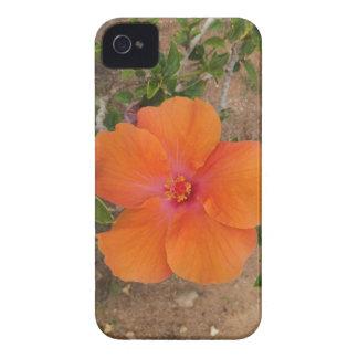 Orange Hibiscus Blackberry Bold case