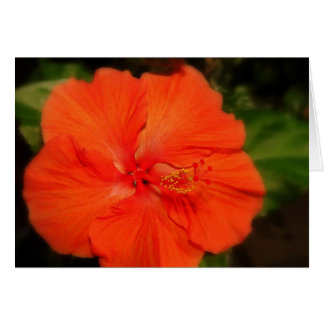 Orange Hibiscus Flower Card