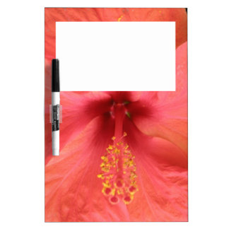 Orange Hibiscus Flower Macro Memo Board