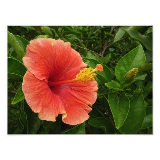 Orange Hibiscus Flower Tropical Floral Photo Print