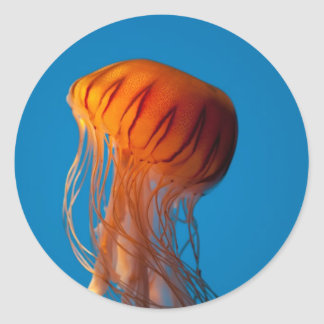 Orange Jellyfish Round Sticker