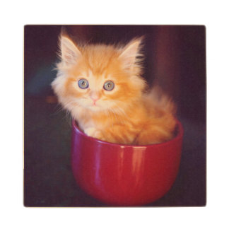 Orange Kitten In A Red Mug Wood Coaster