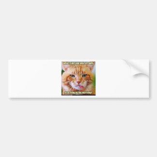 Orange Kitty Car Bumper Sticker