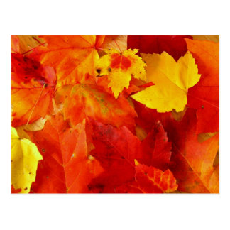 Orange Leaf Fall Photography Postcard