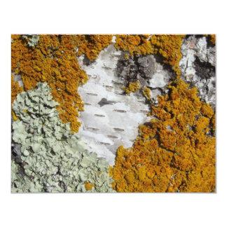 Orange lichen on a tree trunk card