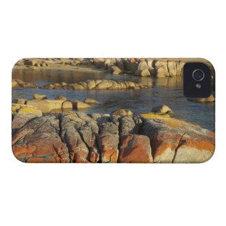 Orange Lichen on Rocks, Binalong Bay, Bay of iPhone 4 Cases