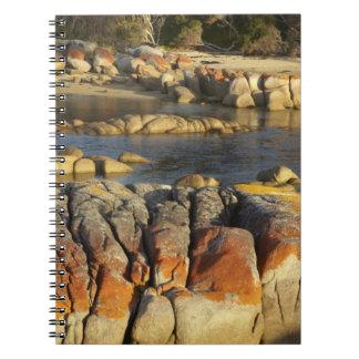 Orange Lichen on Rocks, Binalong Bay, Bay of Spiral Notebook