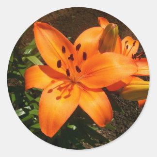 Orange Lilies Stickers