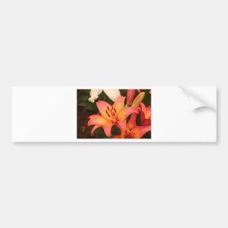 Orange Lilium flower in bloom Bumper Sticker