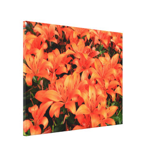 Orange lilium flowers in bloom canvas print