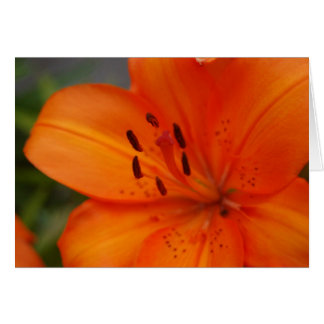 Orange Lily Card