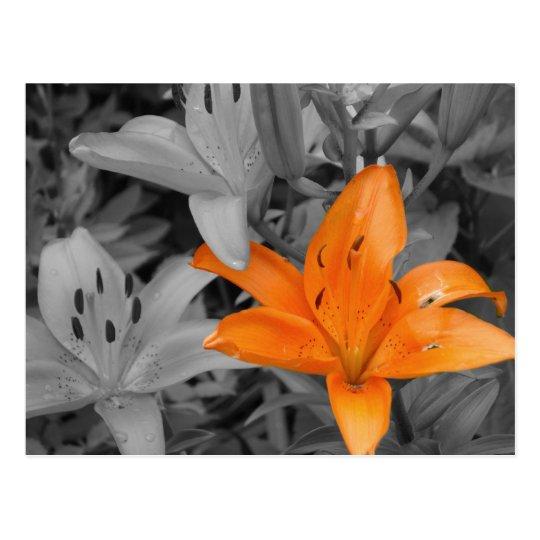 Orange Lily Hand-Coloured Postcard