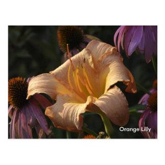Orange Lily Purple Cone Flowers Orange Lilly Postcards