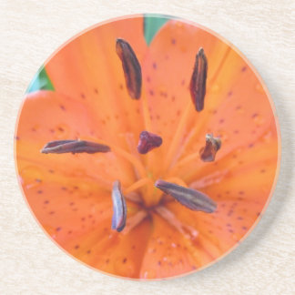 Orange Lily with Water Droplets Sandstone Coaster