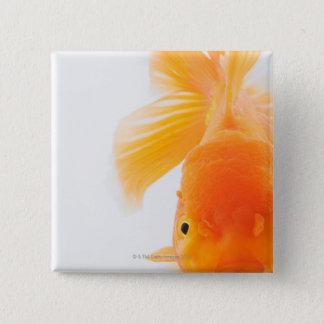 Orange lionhead goldfish (Carassius auratus) 15 Cm Square Badge