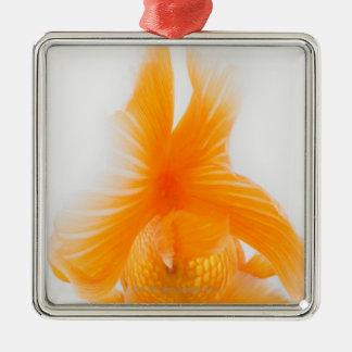 Orange lionhead goldfish (Carassius auratus) 2 Christmas Ornament