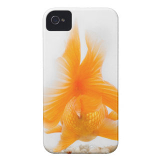 Orange lionhead goldfish (Carassius auratus) 2 iPhone 4 Cases