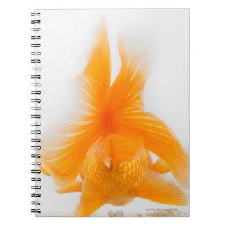 Orange lionhead goldfish (Carassius auratus) 2 Spiral Notebook