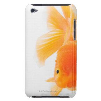Orange lionhead goldfish (Carassius auratus) Barely There iPod Cases