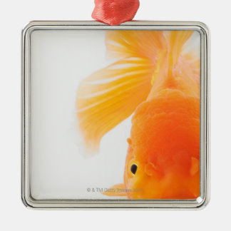 Orange lionhead goldfish (Carassius auratus) Christmas Ornament