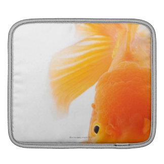 Orange lionhead goldfish (Carassius auratus) iPad Sleeve