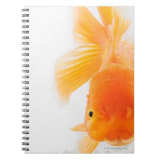 Orange lionhead goldfish (Carassius auratus) Notebooks