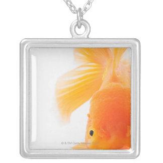 Orange lionhead goldfish (Carassius auratus) Silver Plated Necklace