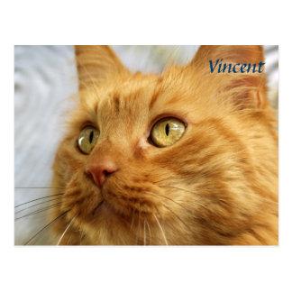 Orange Maine Coon Cat Post Card
