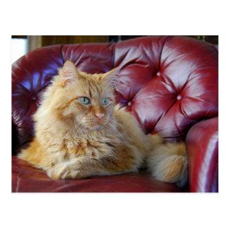 Orange Maine Coon Cat Postcard