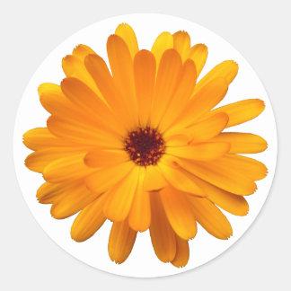 Orange Marigold Classic Round Sticker
