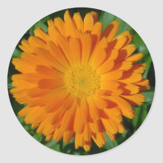 Orange Marigold Close Up With Garden Background Classic Round Sticker